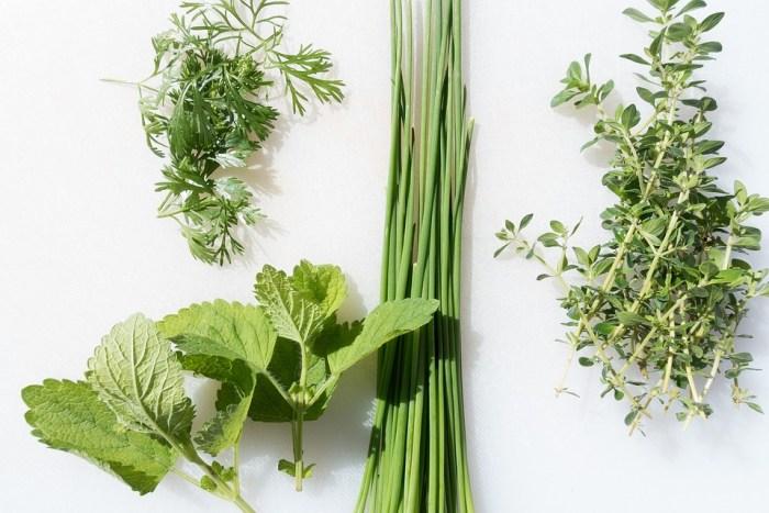 Hausmittel gegen Allergien Kräuter