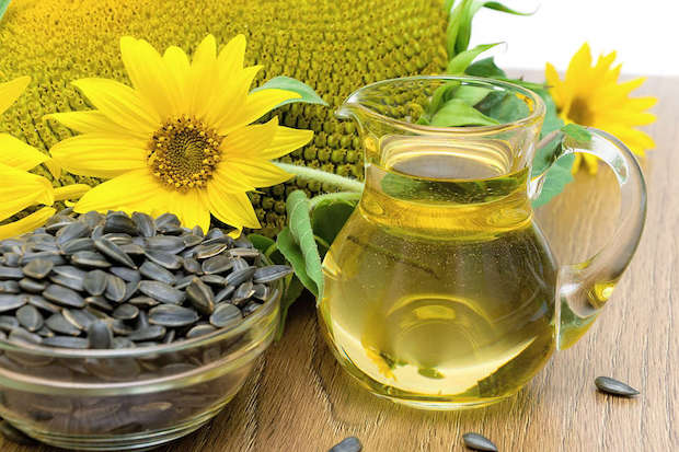 sunflower oil in a glass decanter sunflowers and ripe seeds close-up. horizontal photo.