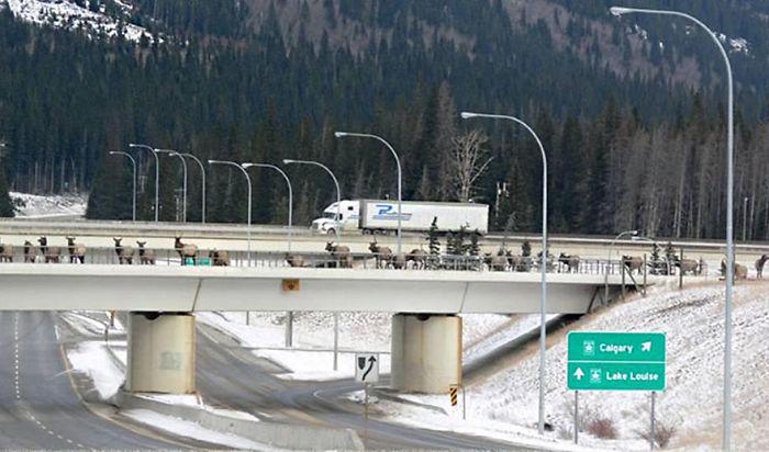Puentes y cruces para animales que salvan a miles de ellos cada año