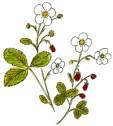 fraisier mini