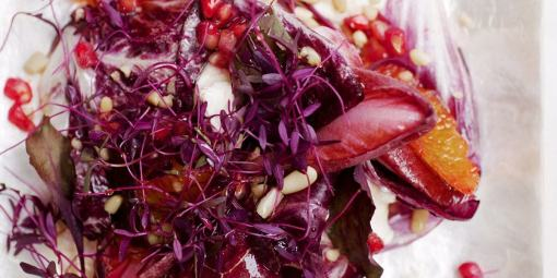 Amaranth | Vitality Farms | Lakeland, Fl | Microgreens