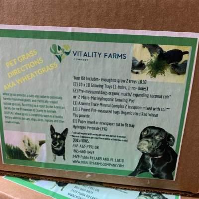 GIY:Pet grass kit