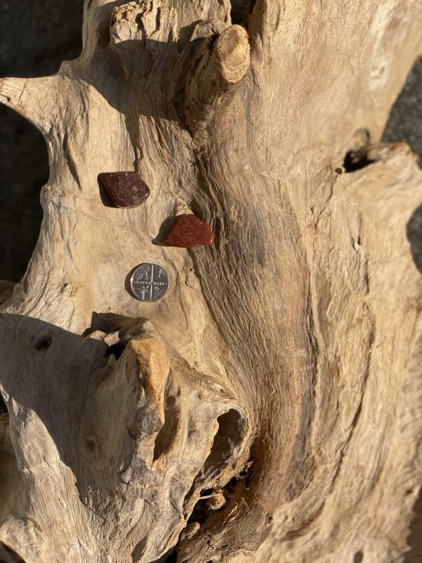 Petrified Wood with 5p