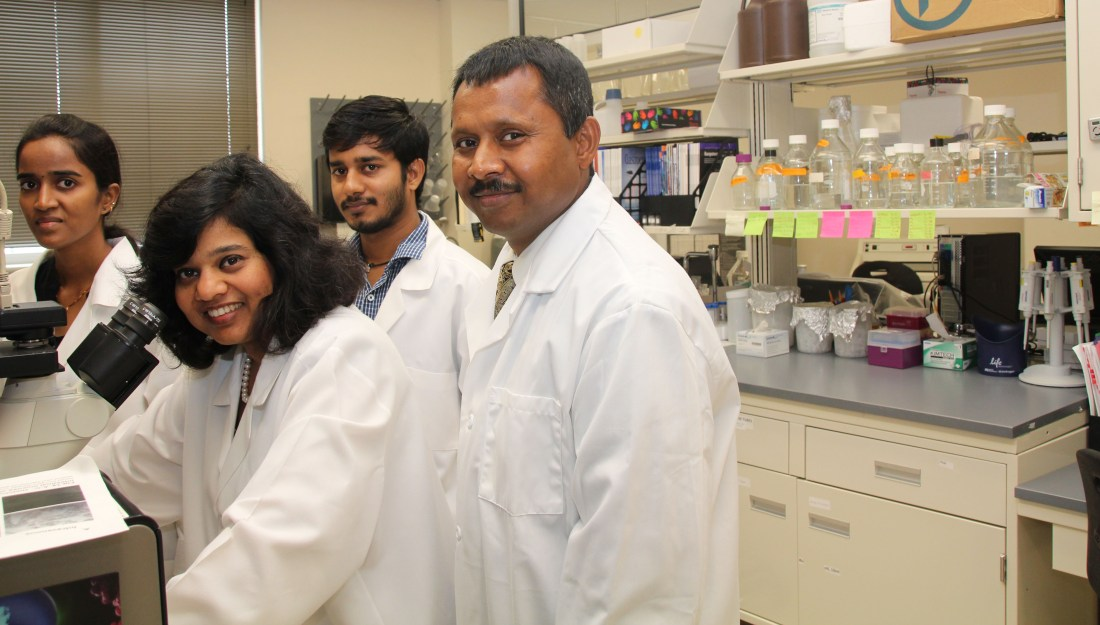Narendra Kumar, Ph.D., associate professor of pharmaceutical sciences, Jayshree Mishra, Ph.D., research assistant, serve as co-principal investigators for a sub-contract of an NIH-funded initiative to develop a device that measure drug effectiveness. Texas A&M University-Kingsville electrical engineering graduate students Lakshmi Korrapati and Saikrishna Krishna work in the lab on the project.