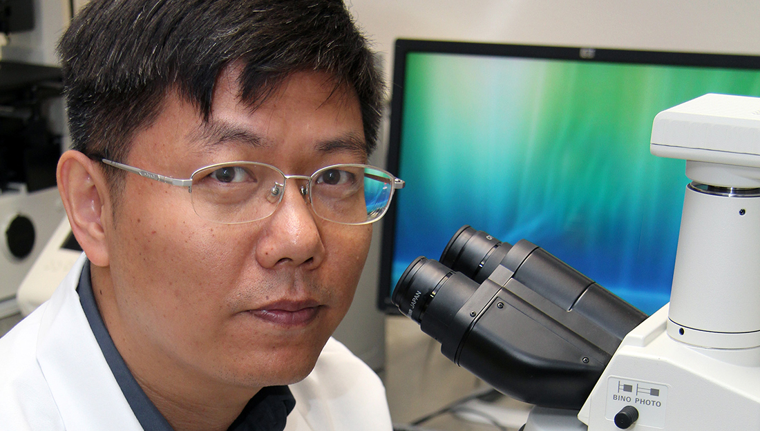 Dr. Lin Zhu researches in his lab at the Texas A&M Rangel College of Pharmacy