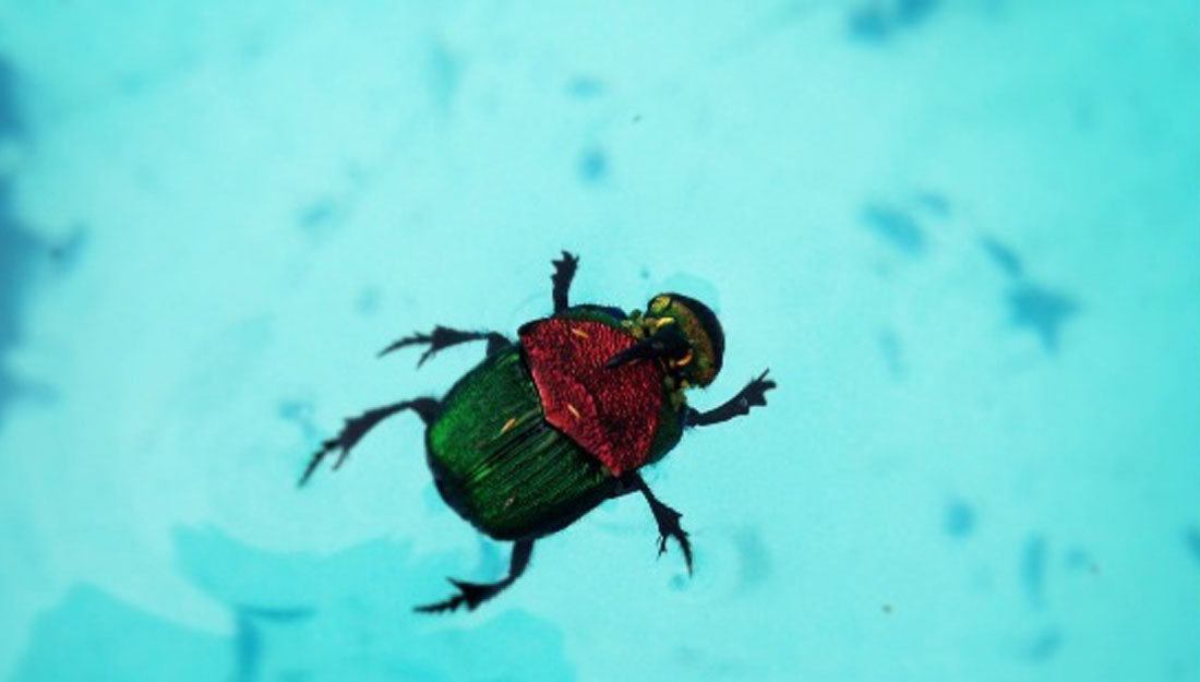 stomach-bug