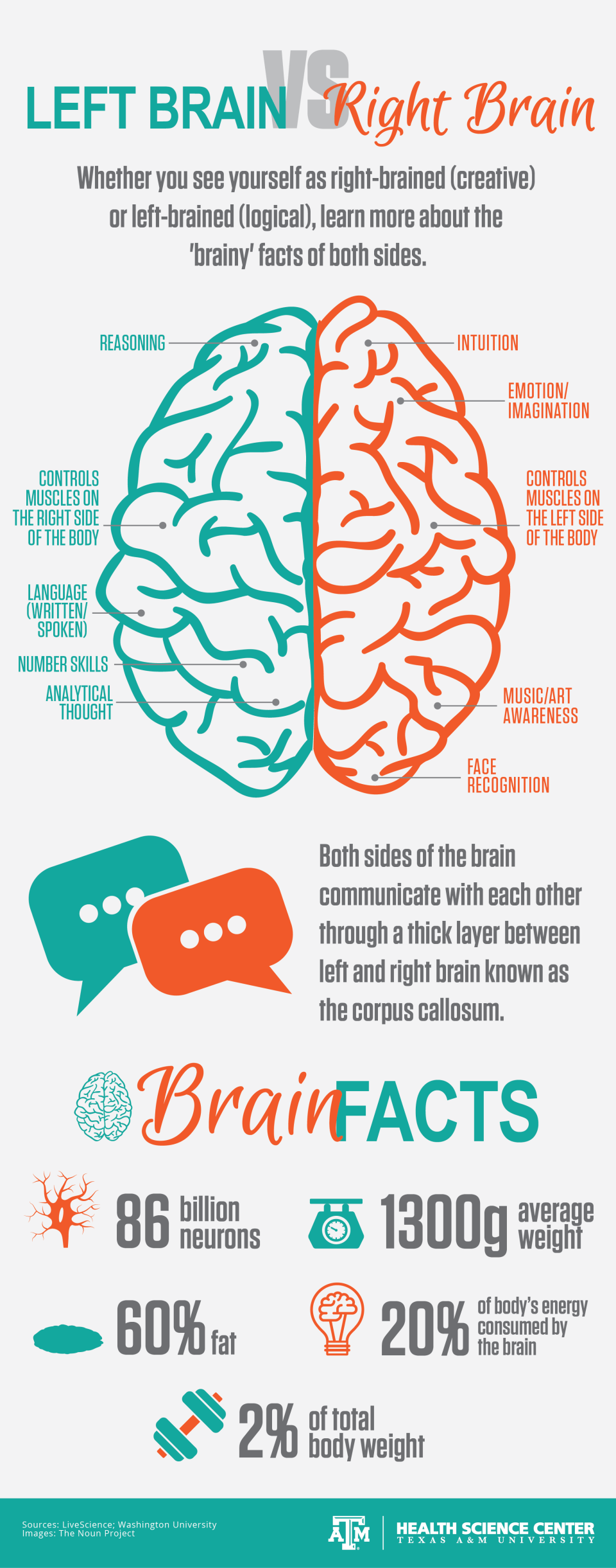 Infographic about left brain and right brain characteristics and facts about the brain anatomy