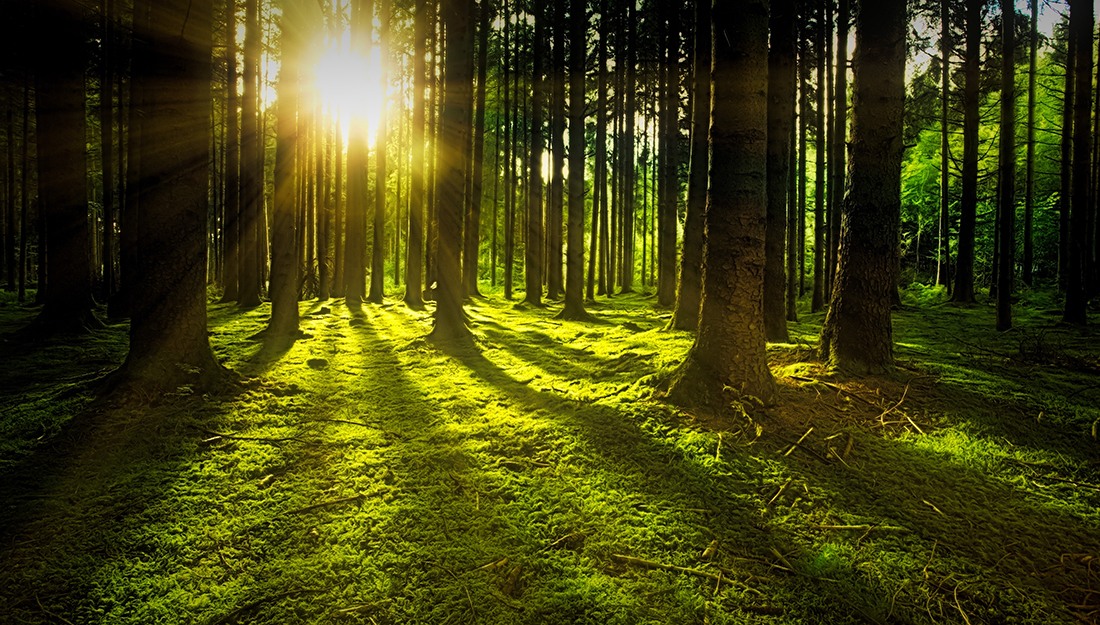 Stress relief using environmental and lifestyle changes-picture of trees in a green field