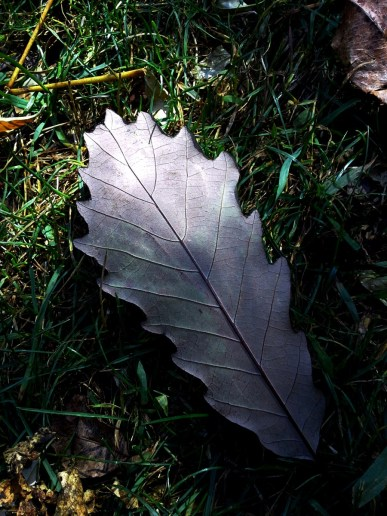 Mysterious Oak Leaf