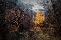 Autumn Halos