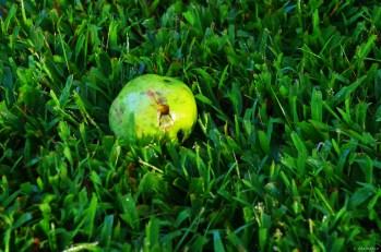 Green Apple Dog Toy