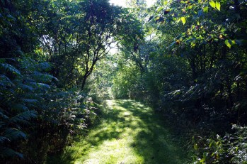 Dappled Sumac Path