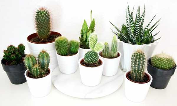 Цветы колючие – Колючие растения: названия, описание, фото