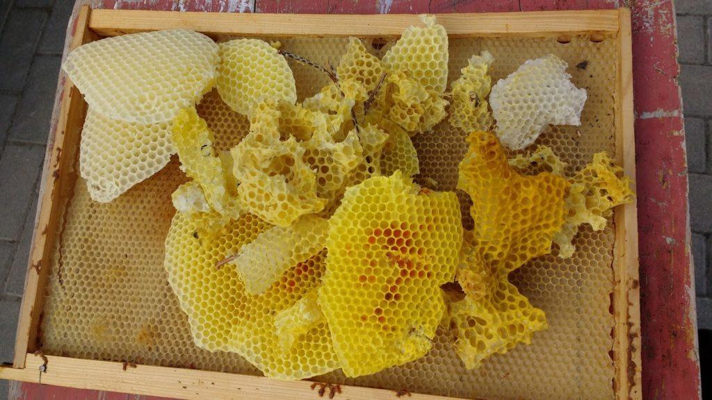 Cera d'api raccolta dallo sciame