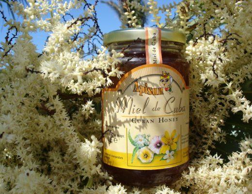 Apicoltura dal mondo il miele di Cuba 2