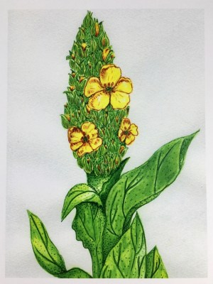Mullein Card front