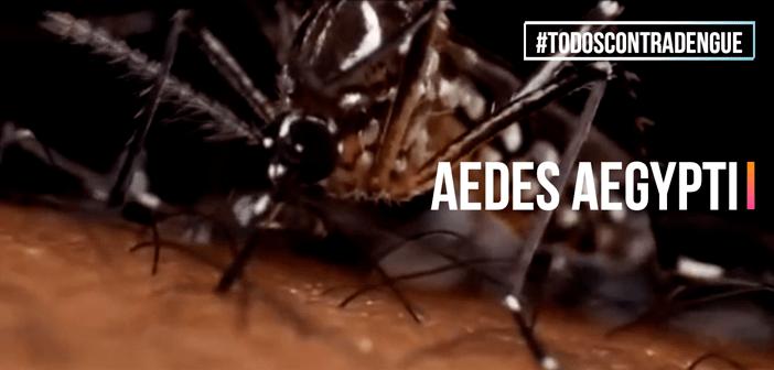 Fique atento e  saiba como se prevenir da Dengue, Zika e Chikungunya
