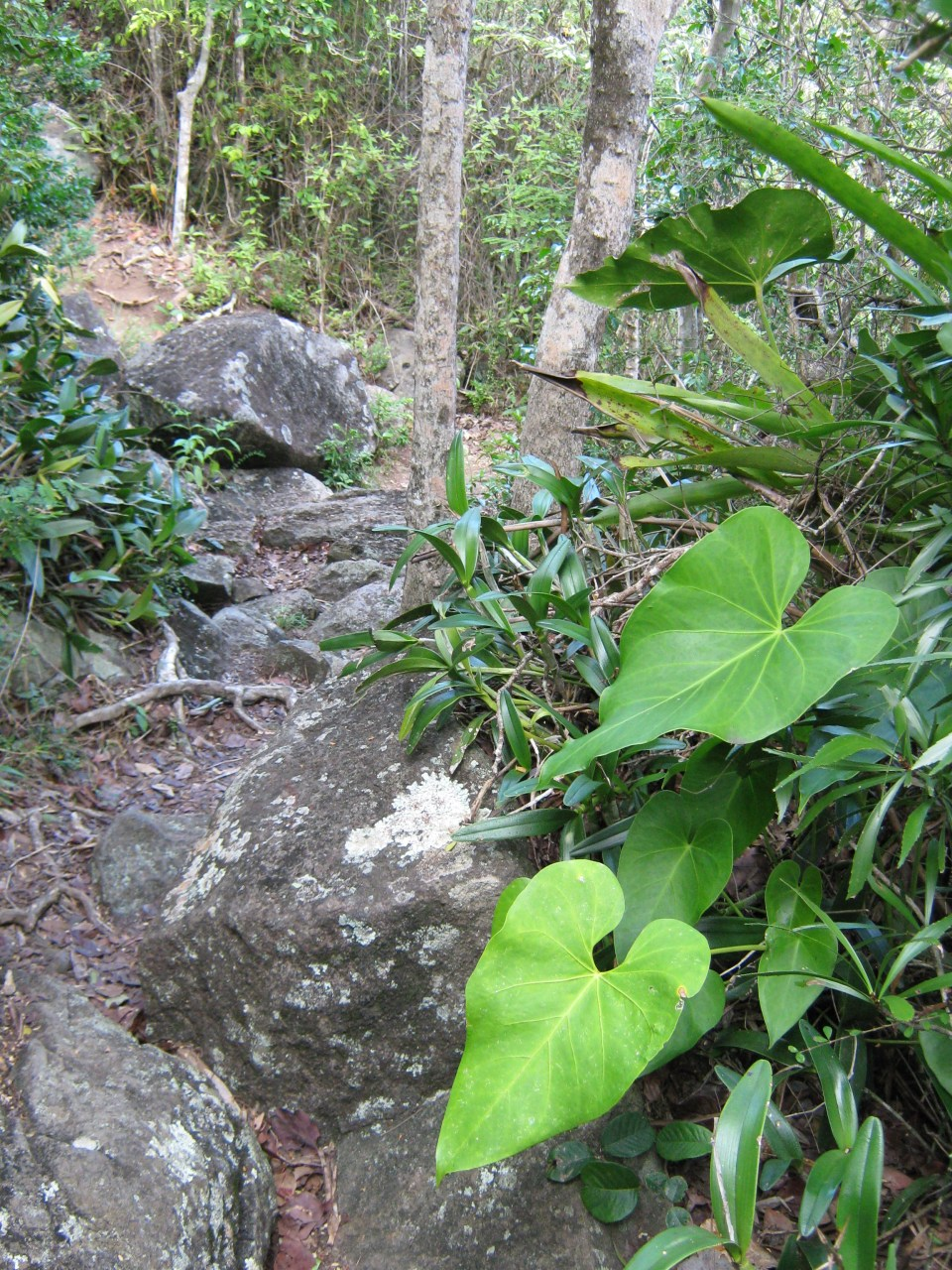 Gorda Peak on Virgin Gorda