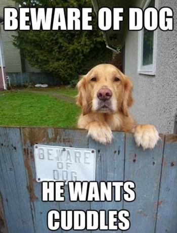 Bewere-of-dog