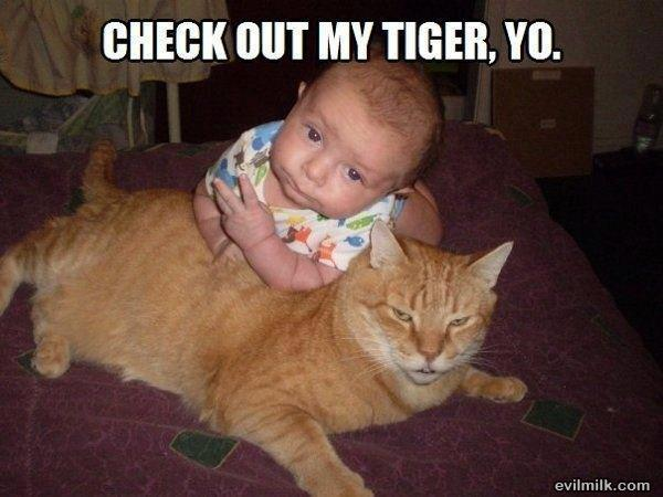 cat-vs-baby-funny-16