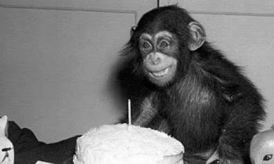 Bursdagsbilder humor - 16 morsomme bilder som passer til noen som har bursdag