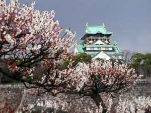 Osaka Castle Park in Kansai's Plum garden
