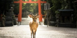 Nara, the ancient capital of Kansai