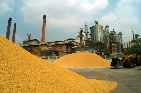 Rice manufacture and processing - Kebbi State -1