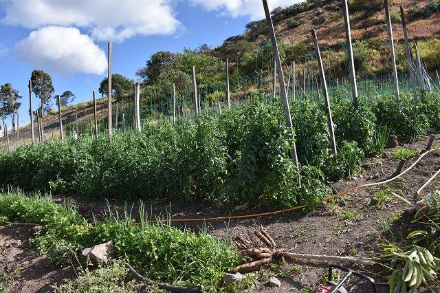 El Tambo: Productos agrícolas