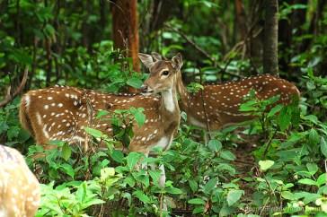 deer dalma wildlife sanctuary