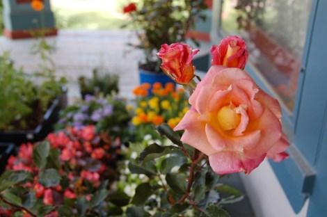 Garden for Blog07
