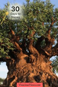 30 Days Until Disney World