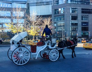 Central Park Faves. Carriage Ride(2). Vivacious Views