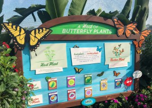 2019 Epcot Flower and Garden Festival. Butterfly Garden. Vivacious Views
