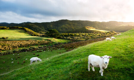 Vegans Split From New Zealand Vegetarian Society to Start Own Group