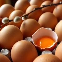 Mitos e verdades sobre ovos: as diferenças entre ovos orgânicos, caipiras e de granja