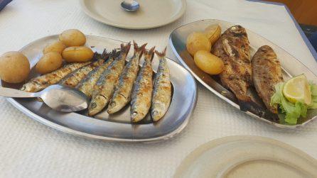 Sardines & fresh fish | Sardinhas e peixes frescos