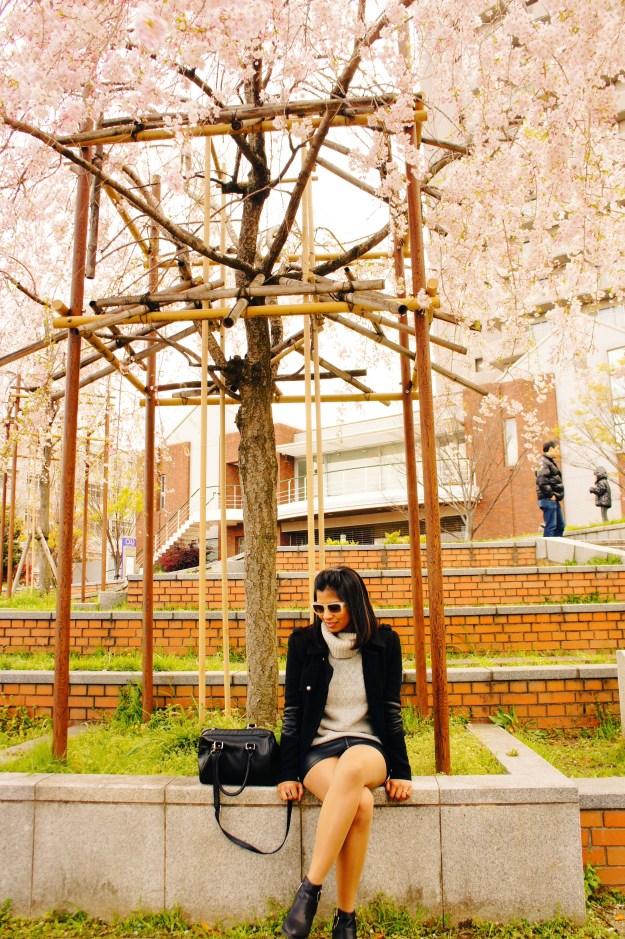 cherry blossom tree