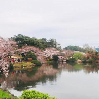 ehere to see sakura in tokyo