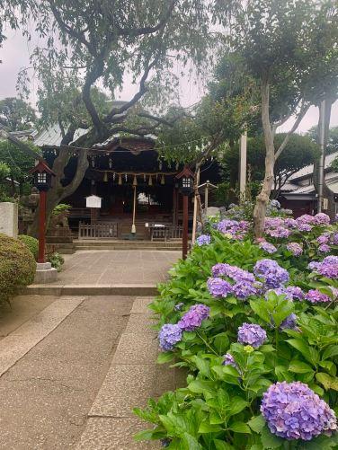 best spot to see hydrangea in tokyo