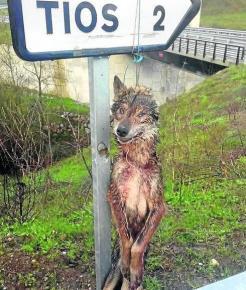lobo ahorcado