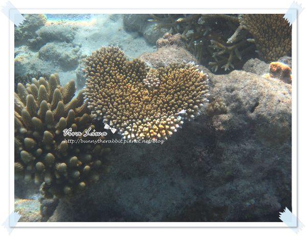 ♥蜜月♥ 馬爾地夫- 讓旱鴨子變身為美人魚的海底世界(下)