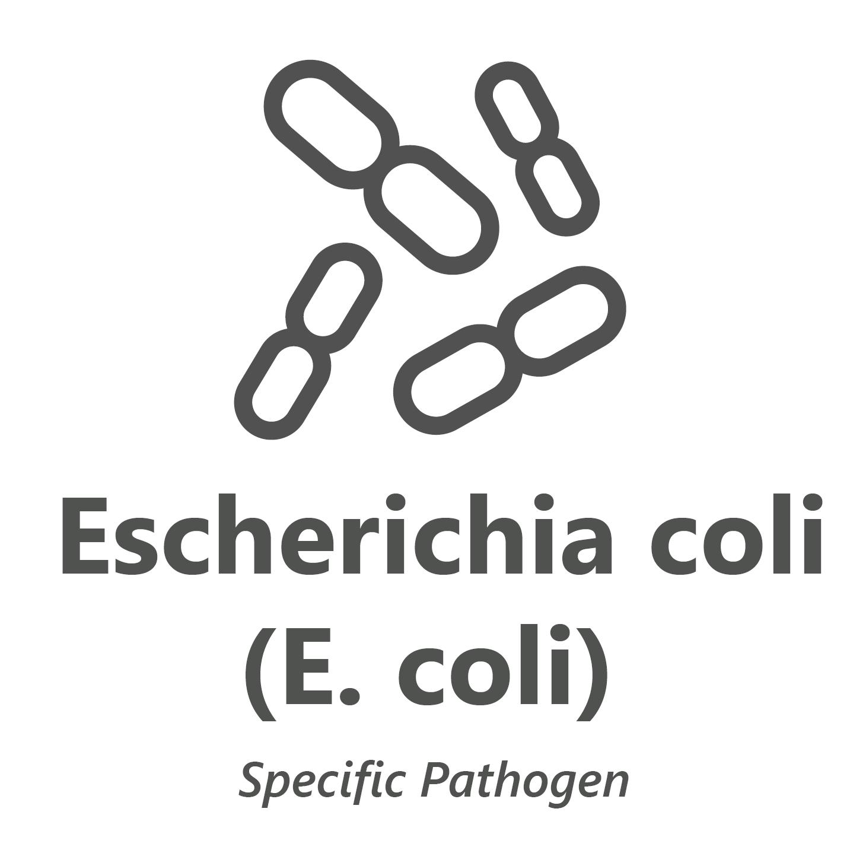 Web store icon for Escherichia coli microbiology test.