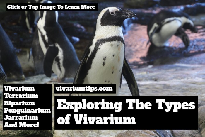 types of vivarium