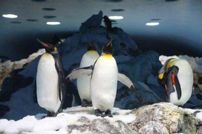penguinarium