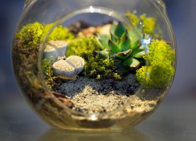 why does my terrarium smell?