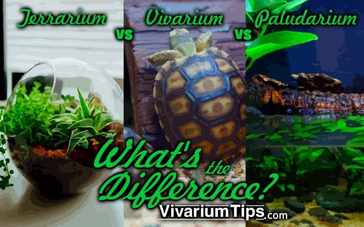 whats the difference? terrarium vs vivarium vs paludarium