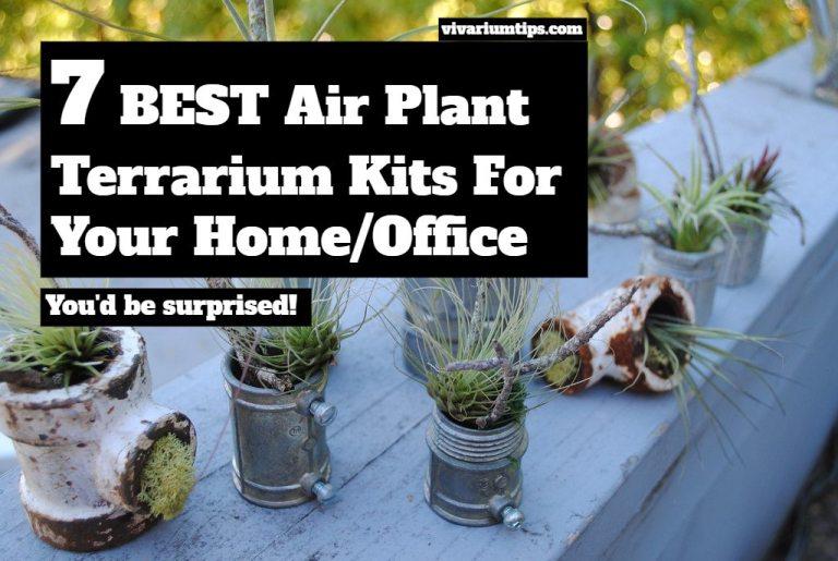 7 best air plant terrarium kits for your home