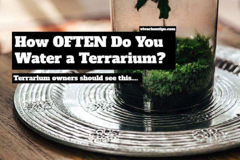 how often do you water a terrarium