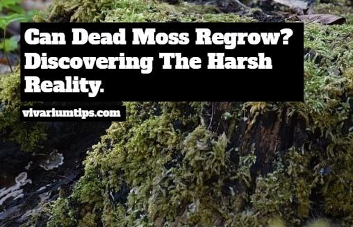 can dead moss regrow?